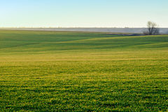 paesaggio Campo verde al sole Fotografia Stock