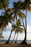 Paesaggio caraibico immagine stock