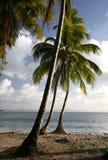Paesaggio caraibico fotografia stock libera da diritti