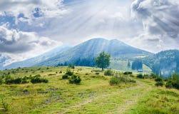 Paesaggio carpatico con il prato della montagna nella priorità alta Fotografie Stock