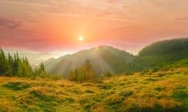 Paesaggio carpatico con il prato della montagna nella priorità alta alla s fotografie stock libere da diritti