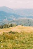 Paesaggio carpatico di Forest Hills del pino sotto il cielo maestoso con il prato giallo su priorità alta Fotografie Stock Libere da Diritti