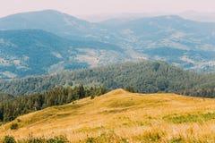 Paesaggio carpatico maestoso di Forest Hills del pino con il prato giallo a priorità alta Fotografia Stock Libera da Diritti