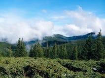 Paesaggio carpatico - montagna Goverla fotografia stock