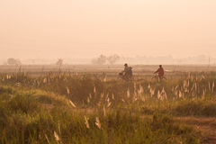 Paesaggio Chaiyaphum in Tailandia Immagine Stock Libera da Diritti
