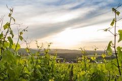 Paesaggio in Champagne, Francia di inizio dell'estate Fotografia Stock Libera da Diritti