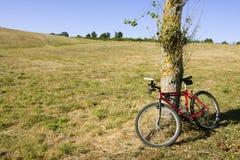 Paesaggio, ciclare ed albero Fotografie Stock Libere da Diritti