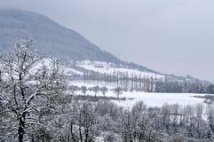 Paesaggio collinoso di inverno con il vicolo della tremula fotografie stock libere da diritti
