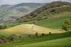 Paesaggio collinoso verde e dorato Immagine Stock