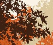 Paesaggio colorato del fogliame di colore marrone del automn Fotografia Stock