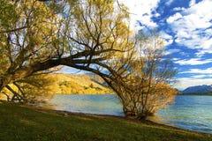 Paesaggio colourful del paesaggio di autunno con gli alberi, il lago e le colline dorate della regione centrale di Otago, lago Ha immagini stock libere da diritti