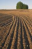 Paesaggio coltivato del campo dell'azienda agricola Immagine Stock