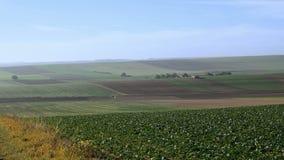 Paesaggio coltivato del campo dell'azienda agricola stock footage