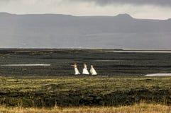Paesaggio con attrazione turistica popolare in Islanda, natura islandese fotografie stock
