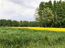 Paesaggio con colore di primavera ed erba verde Fotografie Stock