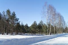 Paesaggio con costoso fra le betulle alla durata di inverno fotografia stock