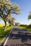 Paesaggio con di melo del fiore Immagini Stock