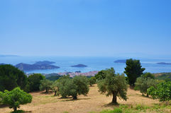 Paesaggio con di olivo Immagini Stock Libere da Diritti