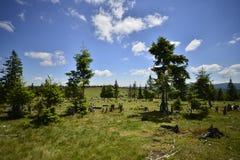Paesaggio con gli abeti ed il paesino di montagna Fotografia Stock Libera da Diritti