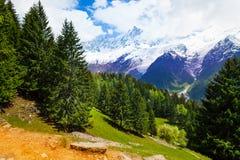 Paesaggio con gli abeti vicino a Mont Blanc, alpi Fotografia Stock
