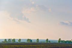 Paesaggio con gli alberi di fila Fotografia Stock