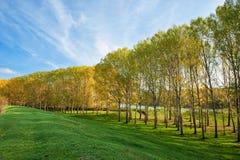 Paesaggio con gli alberi e l'erba immagini stock