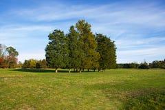 Paesaggio con gli alberi e l'erba Fotografia Stock