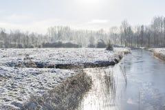 Paesaggio con gli alberi e la canna su una chiara mattina di inverno Fotografia Stock