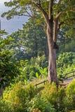 Paesaggio con gli alberi nella priorità alta Fotografia Stock Libera da Diritti