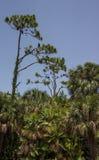 Paesaggio con gli avvoltoi Fotografie Stock