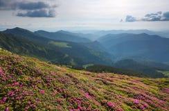 Paesaggio con i bei fiori rosa del rododendro Cielo con le nubi Alte montagne in opacità Posto della località di soggiorno per i  Fotografia Stock Libera da Diritti