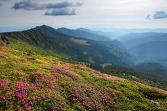 Paesaggio con i bei fiori rosa del rododendro Cielo con le nubi Alte montagne in opacità Posto della località di soggiorno per i  Fotografia Stock