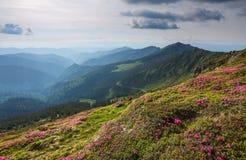 Paesaggio con i bei fiori rosa del rododendro Cielo con le nubi Alte montagne in opacità Posto della località di soggiorno per i  Immagine Stock Libera da Diritti