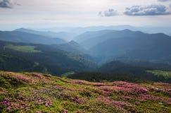Paesaggio con i bei fiori rosa del rododendro Cielo con le nubi Alte montagne in opacità Posto della località di soggiorno per i  Fotografie Stock Libere da Diritti