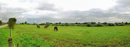 Paesaggio con i cavalli Fotografie Stock Libere da Diritti