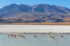 Paesaggio con i fenicotteri, Bolivia della laguna di Canapa fotografia stock