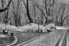 Paesaggio con i fiocchi di neve di caduta - banco di inverno coperto di Sn fotografia stock libera da diritti