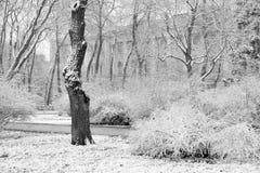 Paesaggio con i fiocchi di neve di caduta - banco di inverno coperto di Sn immagine stock libera da diritti