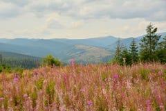 Paesaggio con i fiori e le montagne rosa Fotografia Stock Libera da Diritti