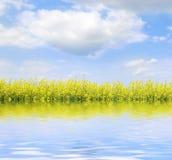 Paesaggio con i fiori gialli Fotografie Stock