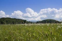Paesaggio con i fiori, la Transilvania della campagna della primavera fotografia stock