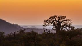 Paesaggio con il baobab nel parco nazionale di Kruger, Sudafrica Fotografia Stock
