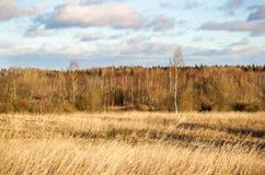 Paesaggio con il campo Fotografie Stock