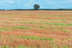 Paesaggio con il campo agricolo fotografia stock