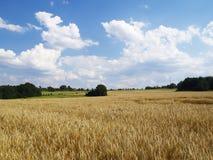 Paesaggio con il campo di granulo fotografia stock