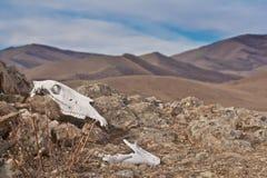 Paesaggio con il cranio del cavallo Fotografie Stock