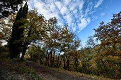 Paesaggio con il fiume e gli alberi XX fotografia stock