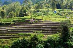 Paesaggio con il giacimento del riso e la giungla, Bali Fotografia Stock Libera da Diritti