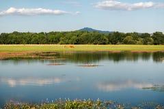 Paesaggio con il lago ed il pascolo Immagine Stock Libera da Diritti