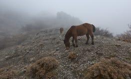 Paesaggio con il pascolo dei cavalli Immagine Stock